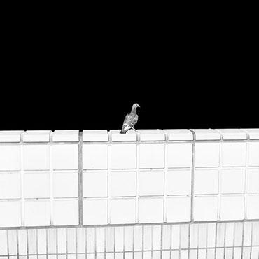 Anomalies 15 , 2009, Mårten Lange,