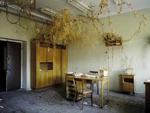 Dead Domestic plants, 2003, Ville Lenkkeri