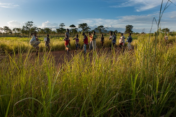 Capim elefante, Niassa, Oriental 2013, 2014, Sergio Santimano