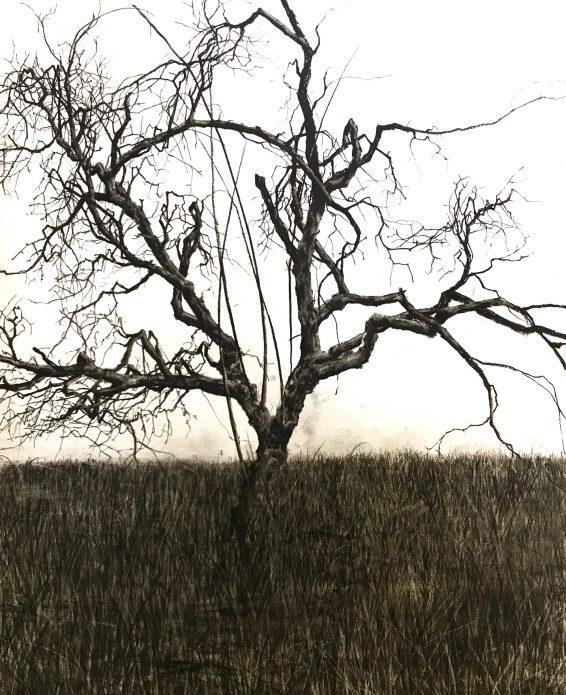 """Patrick Nilsson, """"Mot himmelen"""", 2019, torrpastell på papper, 65x50 cm"""